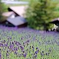 2016-0701-富田農場-04.jpg