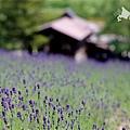 2016-0701-富田農場-05.jpg