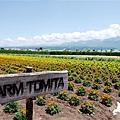 2016-0701-富田農場-20.jpg