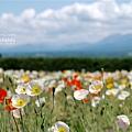 2016-0701-富田農場-23.jpg