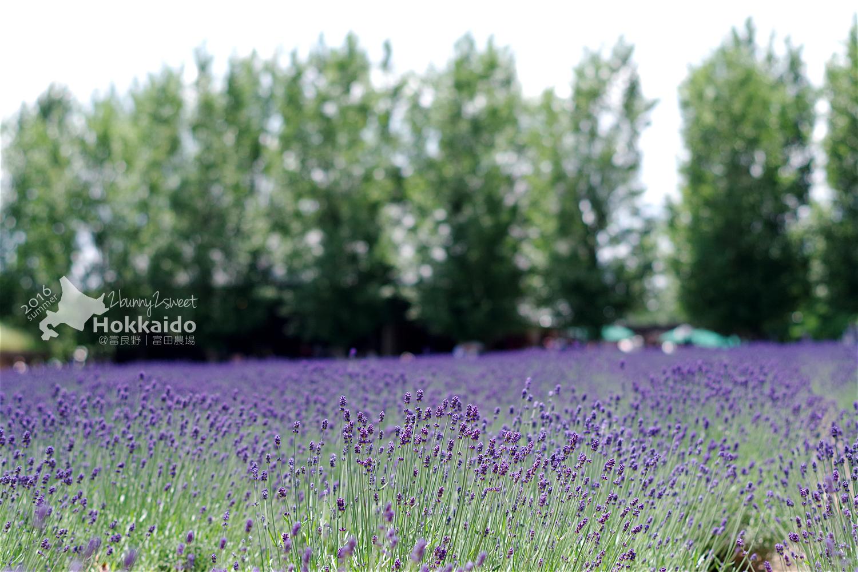 2016-0701-富田農場-26.jpg