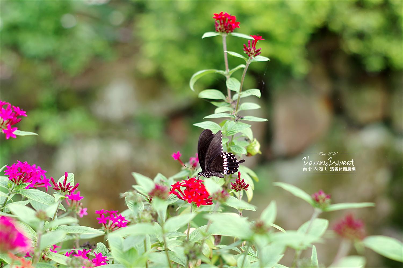 2016-1203-清香休閒農場-23.jpg