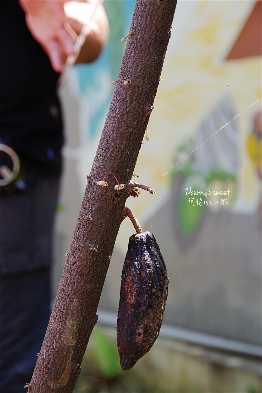2017-0403-阿信巧克力農場-13.jpg