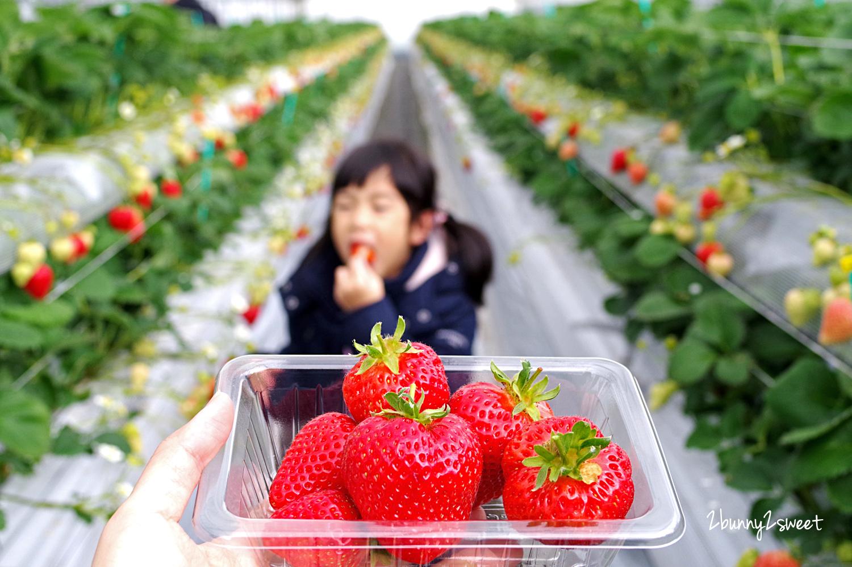 2019-0304-白木のいちご 採草莓-12.jpg