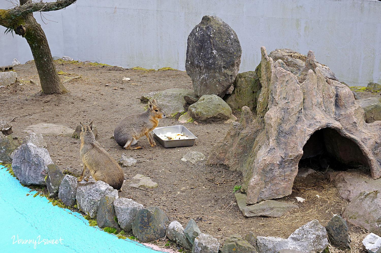 2019-0302-九州自然野生動物園-01.jpg