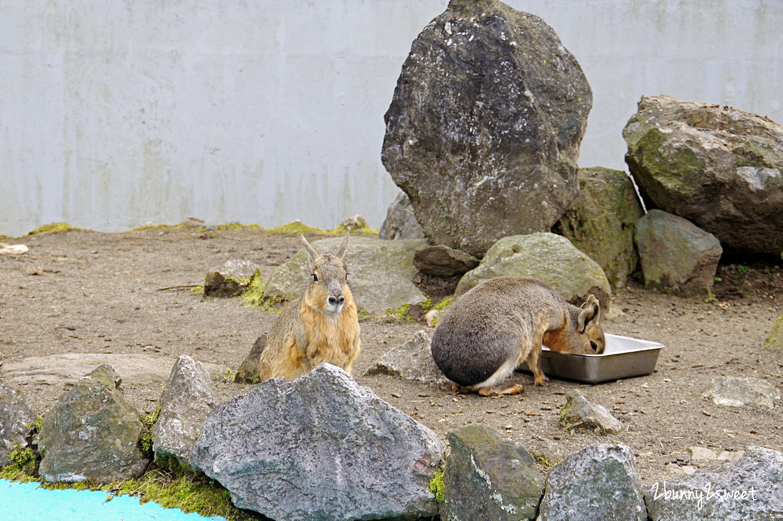 2019-0302-九州自然野生動物園-02.jpg