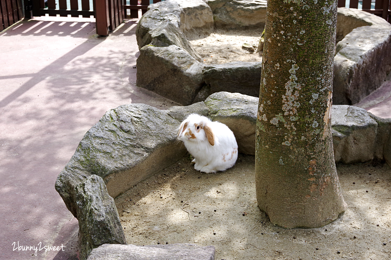 2019-0302-九州自然野生動物園-19.jpg
