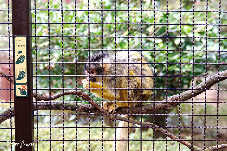 2019-0302-九州自然野生動物園-23.jpg