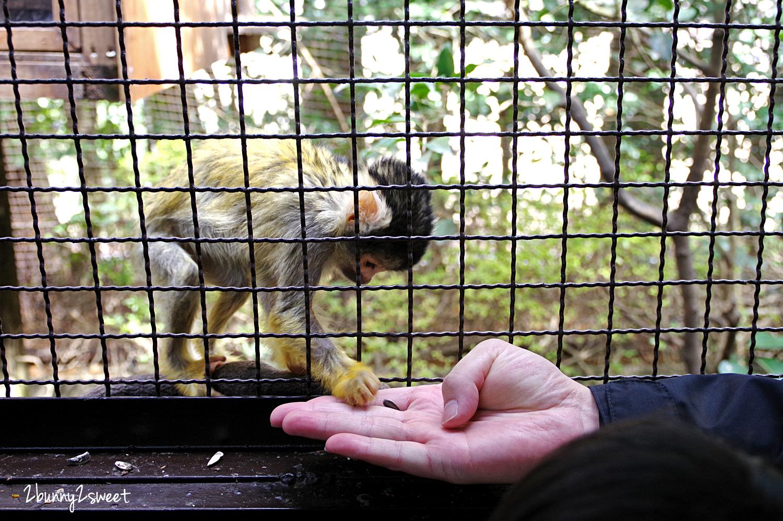 2019-0302-九州自然野生動物園-24.jpg