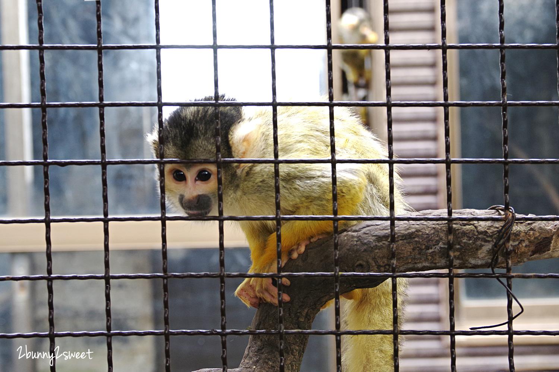 2019-0302-九州自然野生動物園-25.jpg