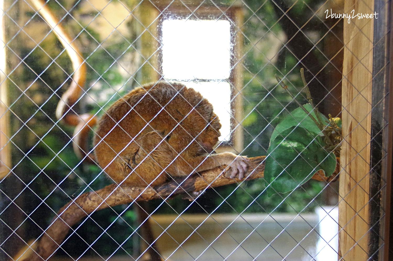 2019-0302-九州自然野生動物園-31.jpg