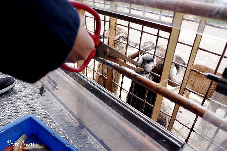 2019-0302-九州自然野生動物園-39.jpg