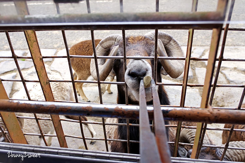 2019-0302-九州自然野生動物園-40.jpg