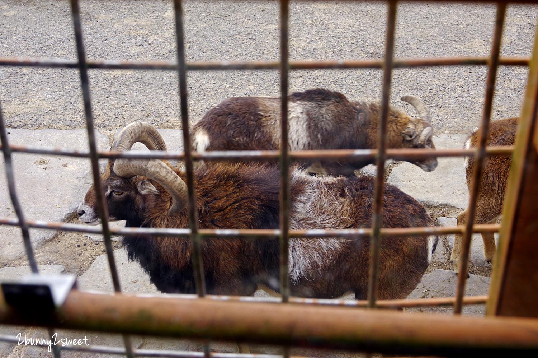 2019-0302-九州自然野生動物園-41.jpg