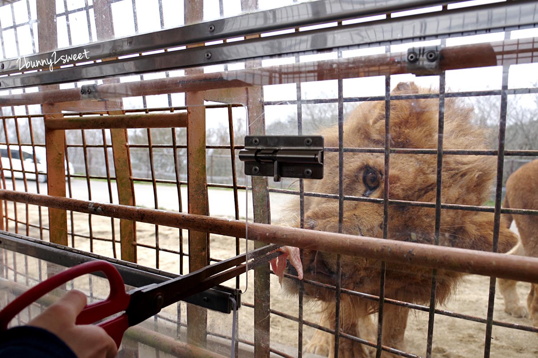 2019-0302-九州自然野生動物園-42.jpg