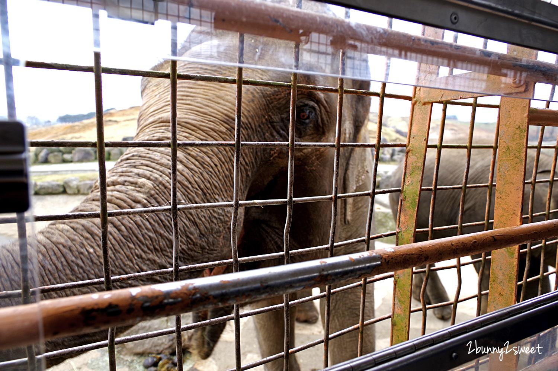 2019-0302-九州自然野生動物園-47.jpg