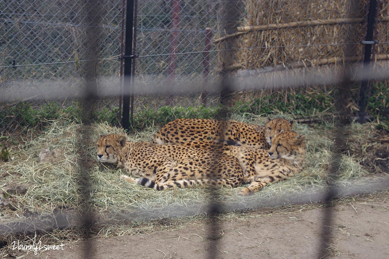 2019-0302-九州自然野生動物園-48.jpg