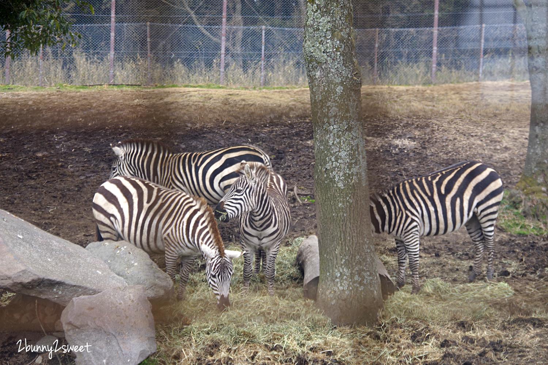 2019-0302-九州自然野生動物園-49.jpg