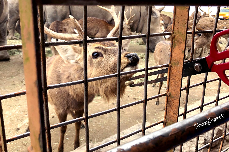 2019-0302-九州自然野生動物園-51.jpg
