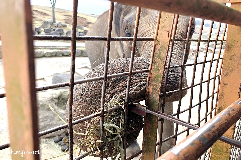 2019-0302-九州自然野生動物園-52.jpg