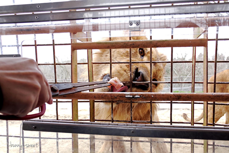 2019-0302-九州自然野生動物園-53.jpg