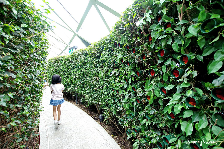 2019-1209-Hedge Maze 樹籬迷宮-05.jpg