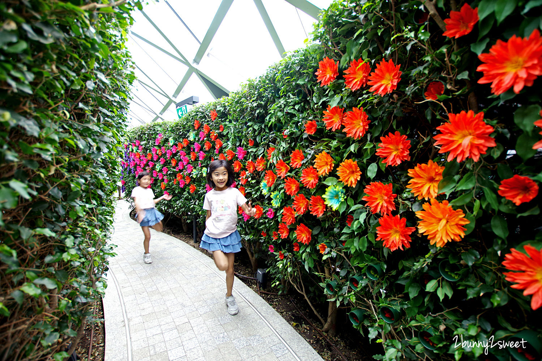 2019-1209-Hedge Maze 樹籬迷宮-06.jpg