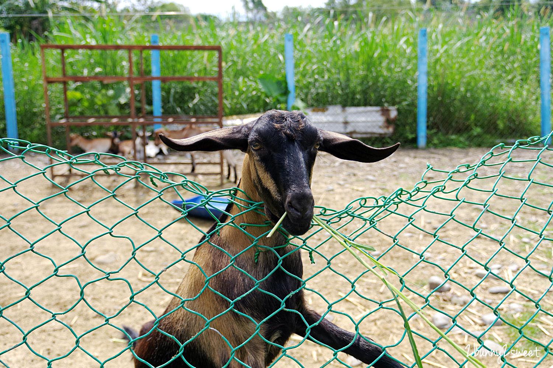 2020-0307-可達休閒羊場-29.jpg