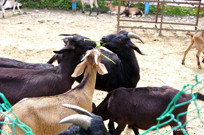 2020-0307-可達休閒羊場-30.jpg