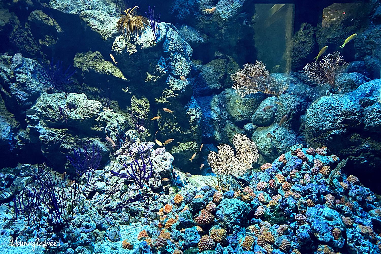 2020-0730-Xpark 水族館-03.png