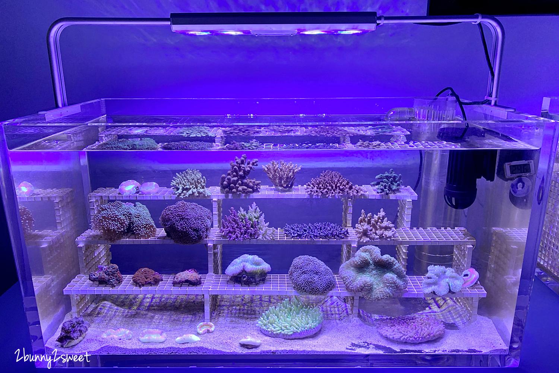 2020-0730-Xpark 水族館-15.png