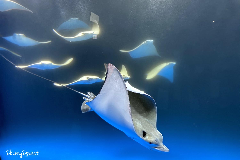 2020-0730-Xpark 水族館-18.png