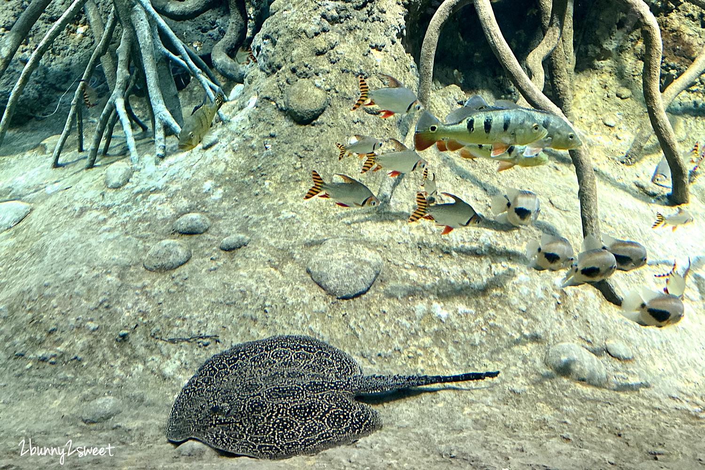2020-0730-Xpark 水族館-22.png