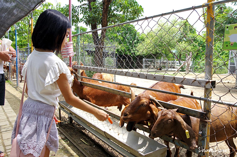 2020-0815-樹谷農場-10.jpg