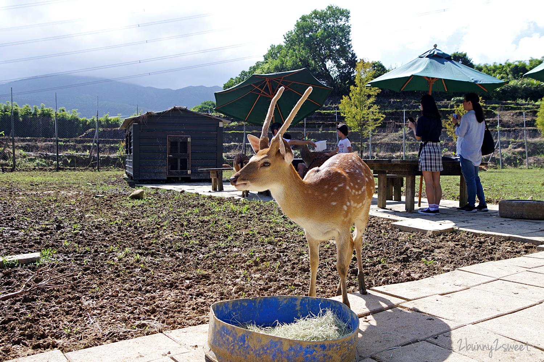 2020-1003-鹿羽松牧場-15.jpg