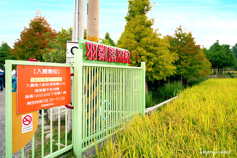 2020-1107-泰安落羽松秘境-03.jpg