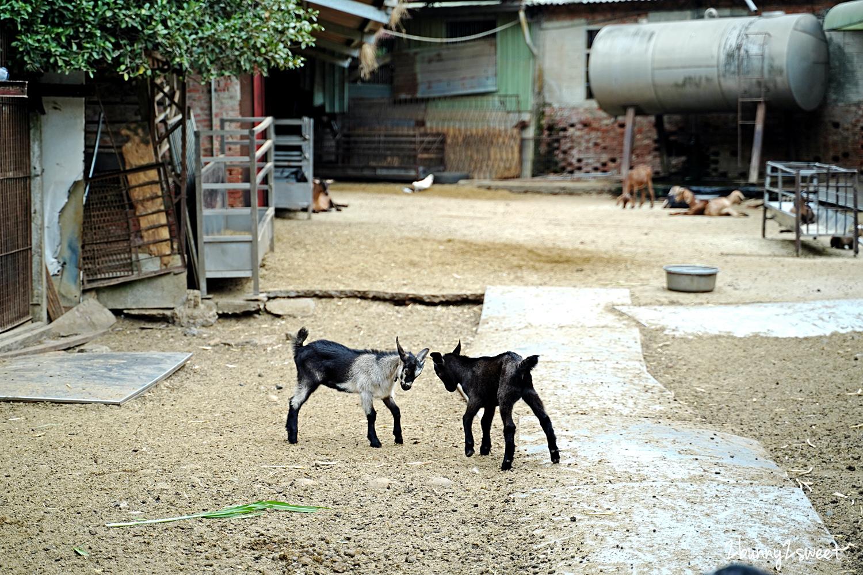 2020-1107-益健乳羊場-09.jpg