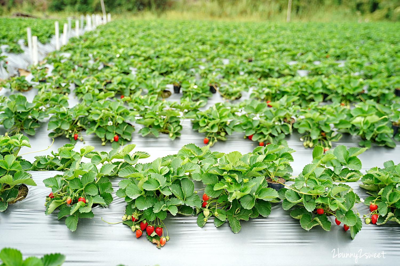 2020-1207-阿松高架草莓園-04.jpg