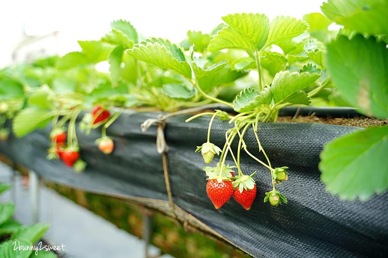 2020-1207-阿松高架草莓園-02.jpg