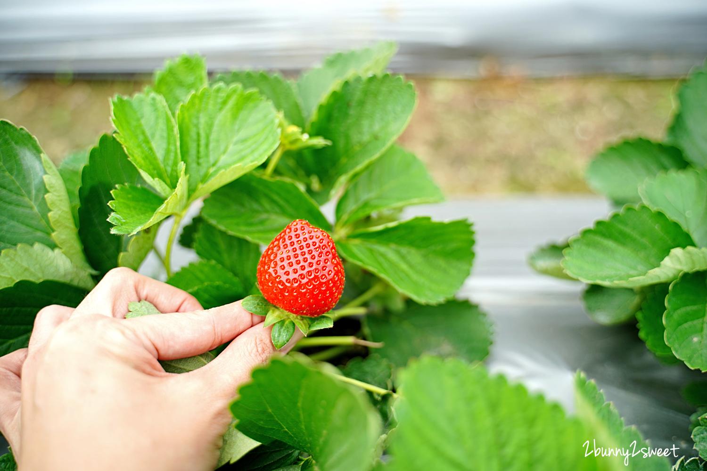 2020-1207-阿松高架草莓園-07.jpg