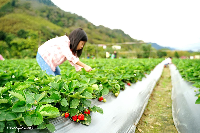 2020-1207-阿松高架草莓園-08.jpg