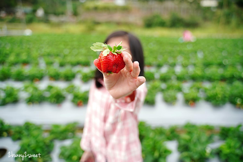 2020-1207-阿松高架草莓園-10.jpg