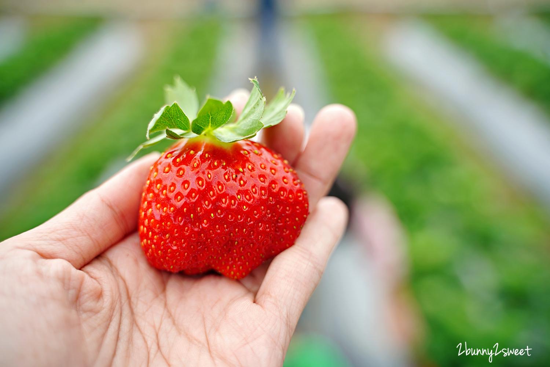2020-1207-阿松高架草莓園-14.jpg