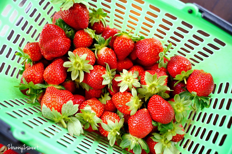 2020-1207-阿松高架草莓園-17.jpg