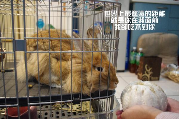 啊啾吃柚子-05.jpg