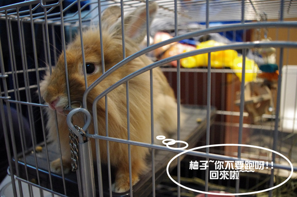 啊啾吃柚子-08.jpg