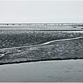 高美濕地1