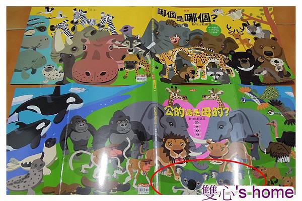 動物圖皮1