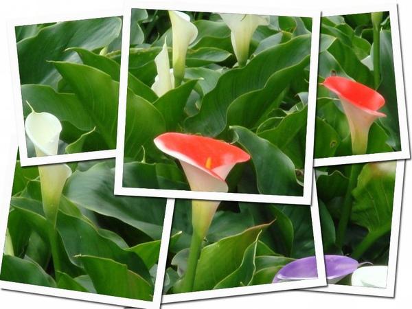 collage30-1.jpg
