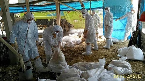 0228014下營禽流感.jpg
